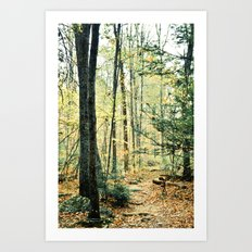 Where We Once Wandered Art Print