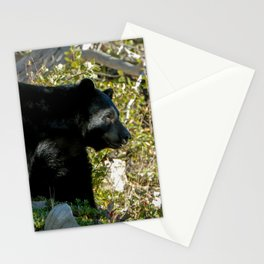 Black Bear On Watch Stationery Cards