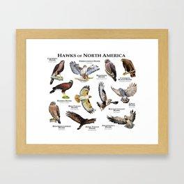 Hawks of North America Framed Art Print