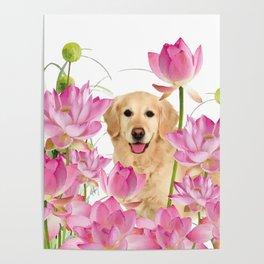 Labrador Retrievers with Lotos Flower Poster