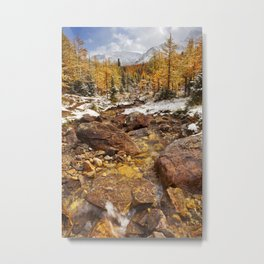 I - Larch trees in fall after first snow, Banff NP, Canada Metal Print