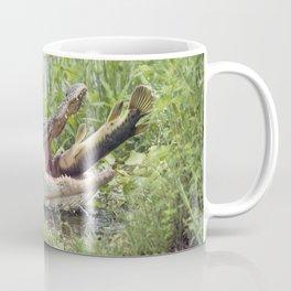Alligator eating a large fish in Florida lake Coffee Mug