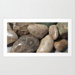 Petoskey Stones Art Print