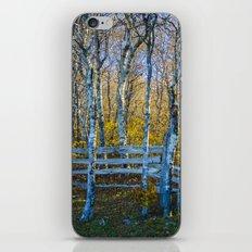 Two birches iPhone & iPod Skin