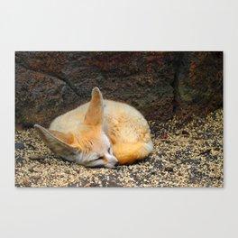 Time to Sleep Little Fennec Fox Canvas Print
