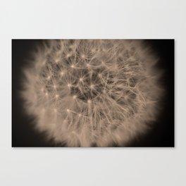 Macro Dandelion Fine Art Photography Canvas Print