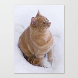 Kitten Discovers Snow! Canvas Print