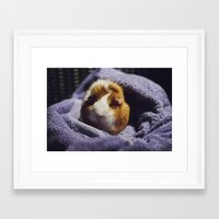 guinea pig Framed Art Prints featuring My brothers guinea pig by Jamie de Leeuw