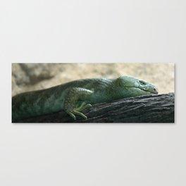 Prehensil Tailed Skink Canvas Print