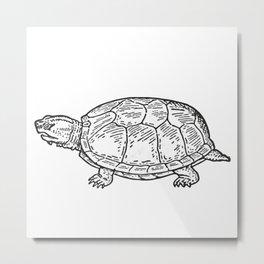 Turtle Metal Print