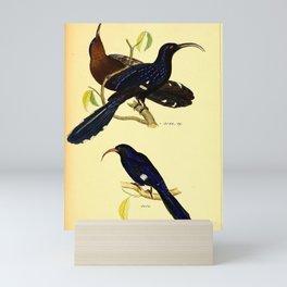 058 falcinellus cyanomelas Abyssinian Scimitar bill4 Mini Art Print