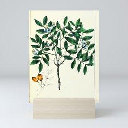 Small-leaved Lignum Vita, guaiacum sanctum Redoute Roses 3 Mini Art Print