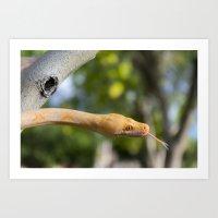 Python in park Art Print