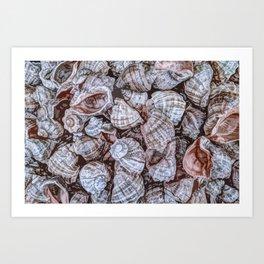 Puka Seashells Art Print