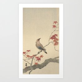 Japanese Maple Songbird  Art Print