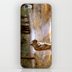 TIGER ON TRACK iPhone & iPod Skin