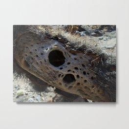 Dead 'teaddy bear' Cactus Metal Print