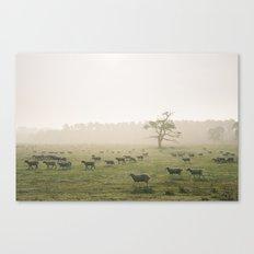 Sunrise burning through heavy fog over field of grazing sheep. Norfolk, UK. Canvas Print