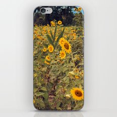 Summer Dance Field of Sun Flowers Botanical Landscape Fine Art Print iPhone & iPod Skin