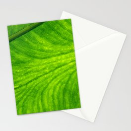 Leaf Paths Stationery Cards
