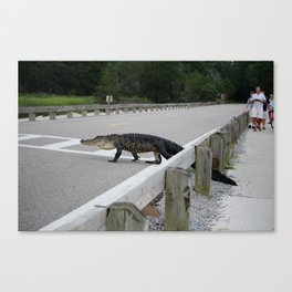 Alligator Watch Canvas Print