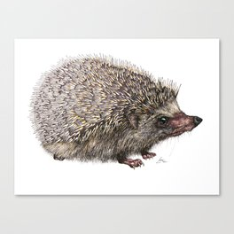 African Pygmy Hedgehog Canvas Print