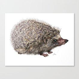 African Pygmy Hedgehog Canvas Print