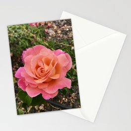 Outrageous Openness: Rose Stationery Cards