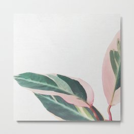 Pink Leaves II Metal Print
