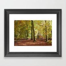 Autumnal beech trees in a natural woodland. Norfolk, UK. Framed Art Print