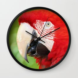 Catalina Macaw Wall Clock