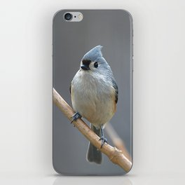 Tufted Titmouse 9639 iPhone Skin
