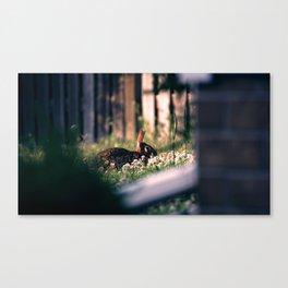 Rabbit At Dusk Canvas Print