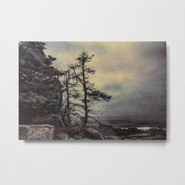 Schoodic Peninsula Metal Print
