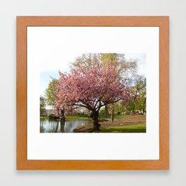 Blossom tree in full bloom Framed Art Print