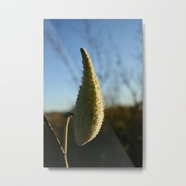 A Spike or Two Metal Print
