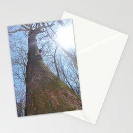 Sunshining Woods Stationery Cards