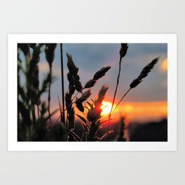 The sweet scent of Summer Art Print