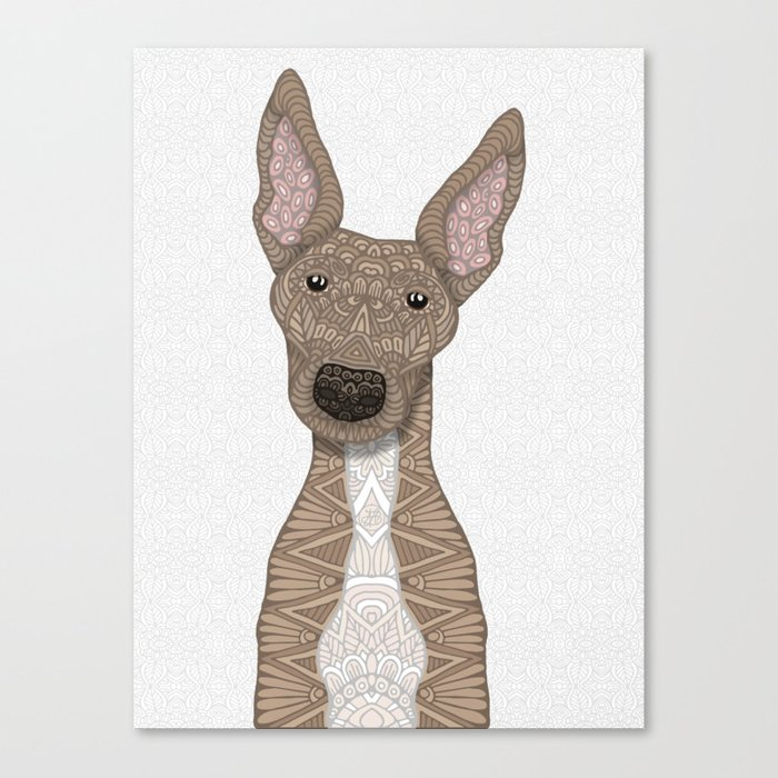 Cute Fawn Greyhound with white belly Leinwanddruck