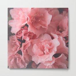 Pink Azalea | photography Metal Print