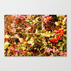 Winter blossom and berries Canvas Print