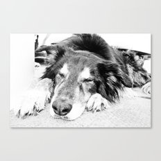 Tired Old Dog Canvas Print