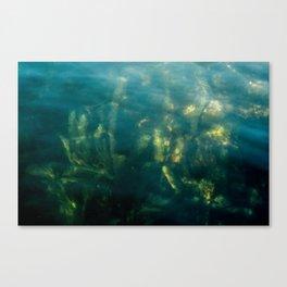 Fresh water seeweed, algae in lake Iseo, Italy Canvas Print