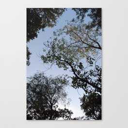 viewing the canopy  Canvas Print