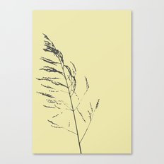 sand reed  Canvas Print