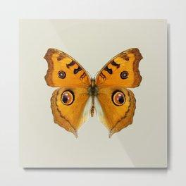Meadow Argus Butterfly Metal Print