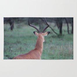Impala whorl Rug