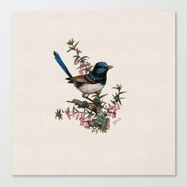 Australian Blue Wren Canvas Print
