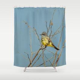 Bird - Western Kingbird - Study 1 Shower Curtain
