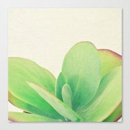 Paddle Plant Canvas Print